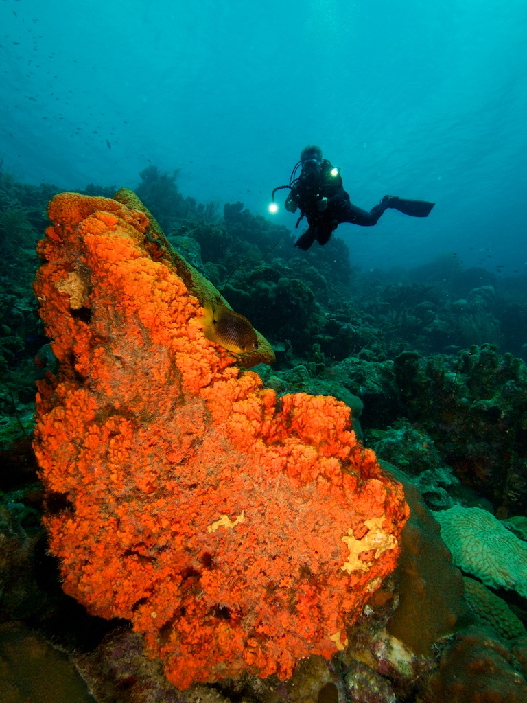 Oranje spons