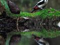 vogelhutglenn